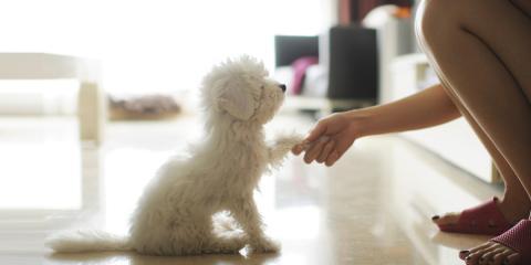 寵物訓練日語家教服務