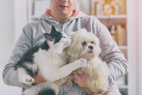 寵物寄養日語家教服務